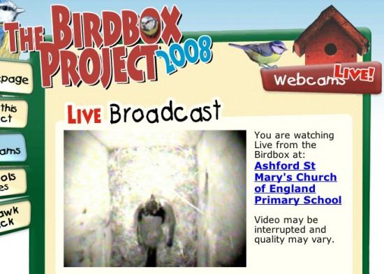 Bird Box Project 2008 Gooii Website Design Nottingham