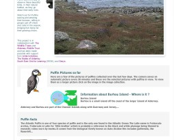 Puffin Cam Website